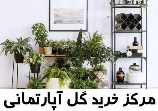 مرکز خرید گل آپارتمانی فروشی آنلاین با قیمت مناسب